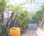 群馬昆虫の森生態温室造園、植栽工事・植栽材料養生・出荷 沖縄養生施設