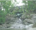 群馬昆虫の森生態温室造園、植栽工事・植栽材料養生・出荷 生態温室