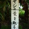 沖縄の珍風景〜ヤシの葉の受難〜看板