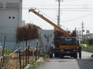 沖縄の珍風景〜サトウキビ積込中〜作業の様子