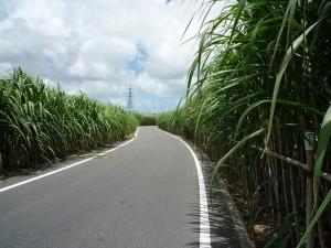沖縄の風景〜サトウキビ畑〜